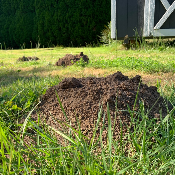 Mole hills illustrate that living a sustainable lifestyle includes some pros and cons.